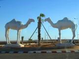 Sahara Aventura 2012 040