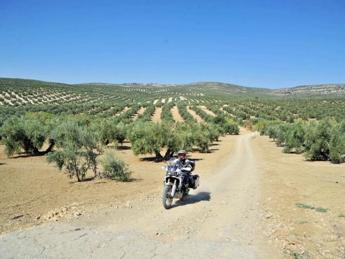 Ruta Trail Africa Twin